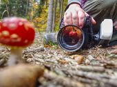 Mushroom Photographer Take A Picture Of Mushroom Fly Agaric Red And Also Make Mushroom Reflection In poster