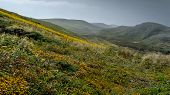Kehoe Beach Trail Eastbound In The Spring At Point Reyes National Seashore, Marin County, Usa,  Feat poster