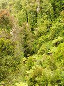 Bird view of lush green sub-tropical NZ rainforest