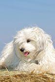 Funny dog on a straw bale