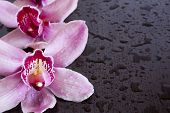 orchids and wenge
