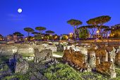 Roman Forum In Rome By Night, Italy - Hdr poster