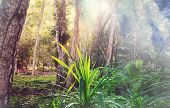 Beautiful green tropical jungle for natural background poster