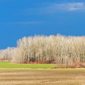 Early Spring Countryside Landscape, Early Spring Sunny Day In A Field poster
