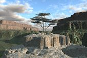 Tree On Canyon Rock