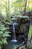 Semperveren Falls