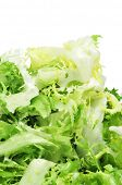 picture of escarole  - some chopped leaves of escarole endive on a white background - JPG