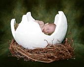 Baby Sleeping In Fantasy Cracked Egg
