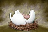 Fantasy Infant Portrait In Bird Nest poster