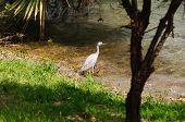 Vogel in ihrem natürlichen Lebensraum