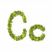 stock photo of storybook  - Leafy storybook font depicting a letter C in upper and lower case - JPG