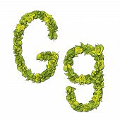 image of storybook  - Leafy storybook font depicting a letter G in upper and lower case - JPG