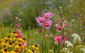 Beautiful Gladiolus flowers in colorful, sunny summer garden