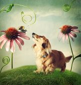 pic of garden snail  - Dachshund Dog and snail in friendship in the fantasy landscape - JPG