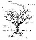 hand drawn black and white illustration of a tree