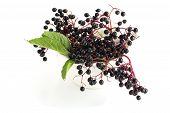 Elderberry In Mortar