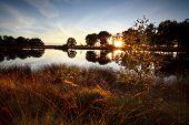 Sunbeams Through Trees By Lake