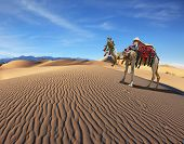 stock photo of dromedaries  - Camel Song - JPG