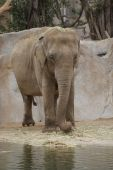 New Elephant Odyssey At The Zoo