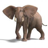 Постер, плакат: Огромный слон