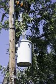 picture of utility pole  - A utility tank on a telephone pole with trees in the background - JPG