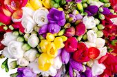 Freesia Colorful Bouquet