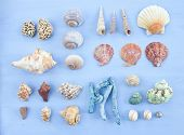 Variety Of Sea Shells