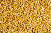 Crumble Corns Of Fodder Maize
