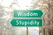 Wisdom or Stupidity