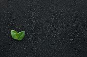 Two Leaf Lying On The Wet Black Background