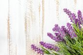 foto of lavender plant  - Lavender flowers on a white wooden background - JPG