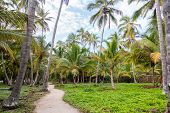 Path And Palm Trees