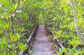 wood bridge in the mangrove forest