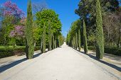 Avenue through the Retiro Park in Madrid