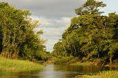 A River And Beautiful Trees In A Rainforest Peru