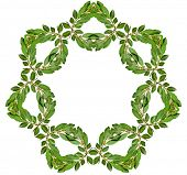 Decoration Garland Frame Wreath of fresh laurel bay leaves isolated