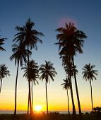 Palm Paradise Tree Silhouettes