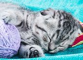 Kitten Sleeping On A Small Pillow