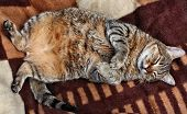 Huge Fat Stuffed Cat Sleeping
