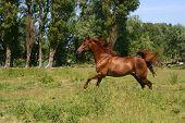 Galoping Horse