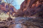 Zion Park Virgin River