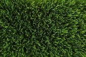 Aerial Grass