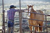 pic of cowboy  - Young man in a cowboy outfit petting a horse - JPG