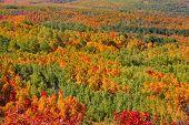 Carpet of fall trees