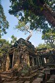 Ancient ruin of the Ta Phrom temple, Angkor Wat, Cambodia.
