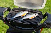 Fresh dorado fish grill cooking outdoors