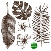 Set of hand drawn tropical leaves and flowers