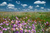 summer landscape with wild flower