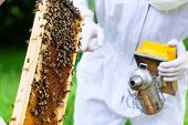 stock photo of smoker  - Beekeeper with smoker controlling beehive and comb frame  - JPG