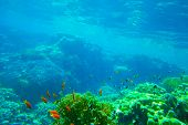 foto of shoal fish  - Underwater panorama with fish and coral - JPG